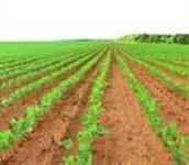 CAPTAÇÃO E ARRENDAMENTO DE ÁREAS RURAIS - AGRICULTURA E PECUÁRIA