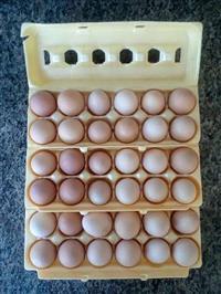 Vendo Ovos Galinha Caipira