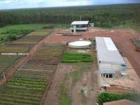 Fazenda Eucalipto  para Venda Palmas / TO ALIANÇA FAZENDA COM 144 MIL HECTARES R$2,7 BILHOES
