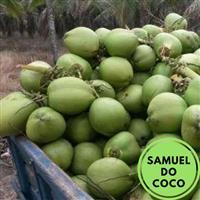 Fornecemos coco verde direto do nordeste