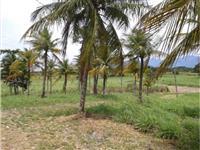 Terreno Sitio em itaguaí Rio de janeiro