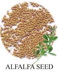 Semente de Alfafa