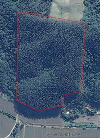 Terreno 18 hectares com Eucalipto Grandis