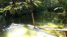 Sítio 54 hectares em Breu Branco - Pará