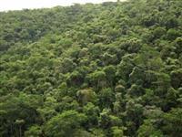 compraevendamatanativa temos área para compesação ambiental, crédito bancário e carbono em todo br