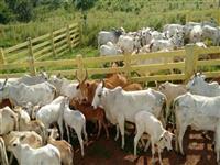 Excelente Fazenda em Aquidauana - MS - Ótimo Preço!!!