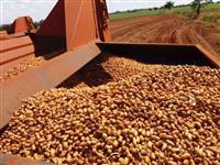 Procuro áreas para arrendar para o plantio de amendoim, soja ou cana-de-açucar