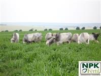 Varredura NPK R$ 250,00 a ton