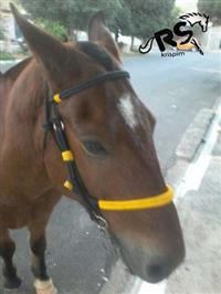 Cabeçada e cabresto  7 nós para cavalo e mula