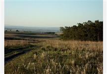 OPORTUNIDADE Fazenda de 700 hectares para plantação de arroz e pecuaria, por R$ 14.178.000,00