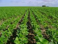 Fazenda Piracanjuba Goias Agricultura