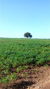 Fazenda Figueirópolis Tocantins