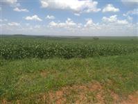 Fazenda na região do triângulo - Uberlândia / Uberaba MG