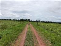 Fazenda para criação de gado, piscicultura e/ou plantação de arroz