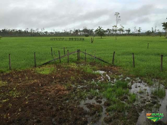 Fazenda em Macapá para plantação de arroz, soja, gado, implantação de condomínio com Marina