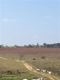 Venda de fazenda na região de Itapetininga/SP