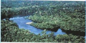 Grande área no Amazonas
