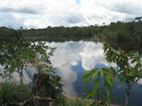 Fazenda georreferenciada no Amazonas para garantias bancárias, REDD, servidão