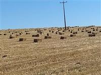 Feno de palha de trigo e azévem