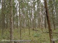 Vendo floresta de acácia