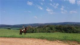 Égua Campolina / Quarto de milha com montaria Schimandeiro
