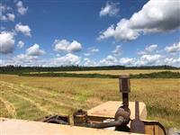 Bela fazenda