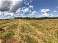 Fazenda Piauí