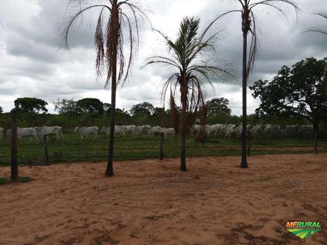 Fazenda São João Urucuia -MG