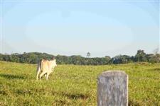 Fazenda de 21.780 hectares