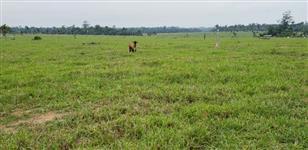 Fazenda de 978 hectares para lavoura e pecuária.