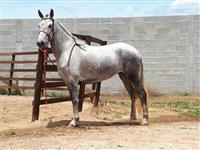 Égua MM