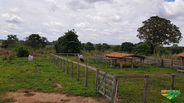 Fazenda em Baianópolis