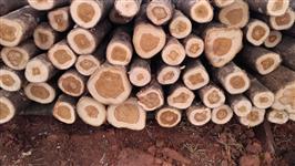 vendo madeira de teca desbaste
