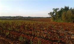 Sitio em Tatuí (Interior de São Paulo) - Terreno de qualidade ideal para plantação e criação de gado