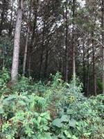 Fazenda de Pinus Rio Branco do Sul