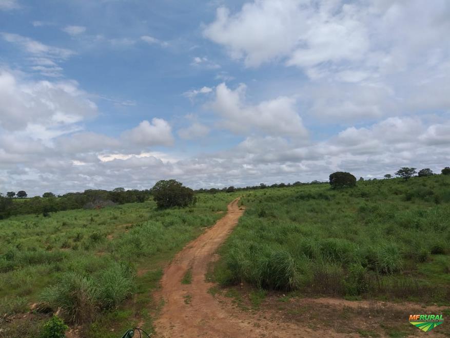 Fazenda 212 Alqueires Em São Valério - Tocantins 212 Alqueires