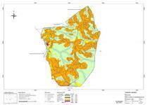 Reflorestamento de Eucalipto em Lontras