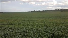 Fazenda XINGU - MT