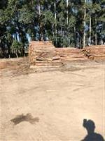 Colheita Florestal de Pinus