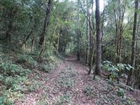 Sitio 130 hectares em Gramado na Serra Gaúcha.