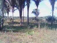 Fazenda com 125 hectares