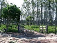 FAZENDA 240 ALQUEIRES (cidade de Ulianópolis PA)