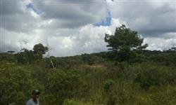 Fazenda 60 ALQ em Guarapuava PR