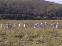 Fazenda 529 Hectares