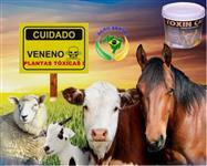 PREVINTOX - POTENTE ANTI-TÓXICO DE COCHO, COM MINERAIS, VITAMINAS E AMINOÁCIDOS