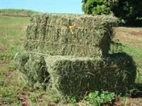Procuro fazenda para arrendamento em SP ou Sul de Minas