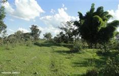 Fazenda a venda em Minas Gerais