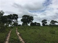 vendo uma excelente fazenda em minas com 555 hectares
