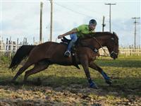 Cavalo de Vaquejada / Direita