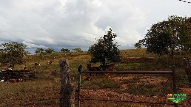 Fazenda 183 hectares em São Roque de Minas, bairro Olhos d´agua.